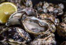 ostra-maricultura-santa catarina