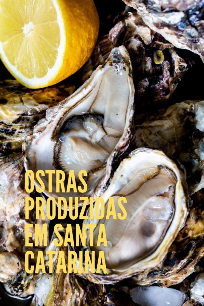 ostra-maricultura-santacatarina