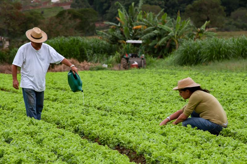 campo com gente agricultura familiar