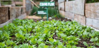 horta organica